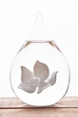 Druppel orchidee